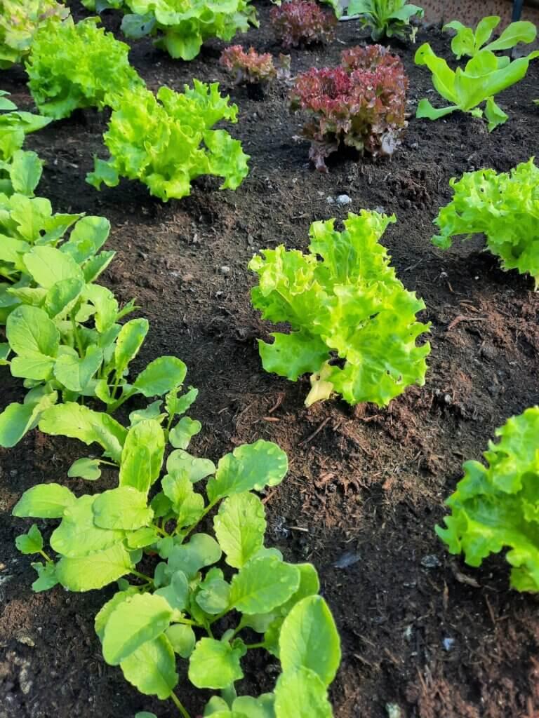 Unser Gemüsegarten