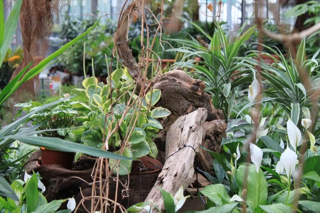 Zimmerpflanzen Verschiedene Zimmerpflanzen