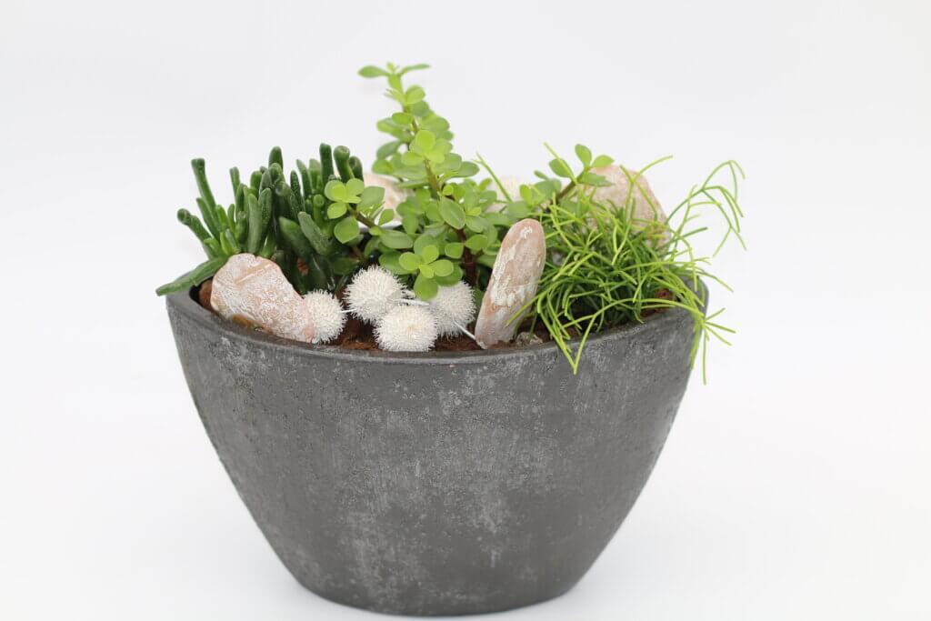 Geschenkideen Zimmerpflanzenschale